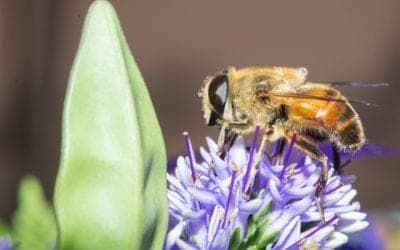 Best Practices for Pest Control of Honeybees