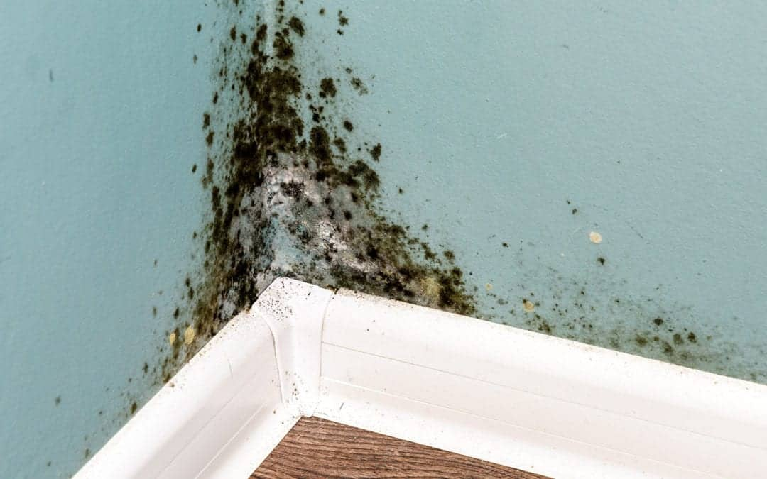 What To Do About Mold and Mold Damage